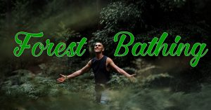 Book your Free Ticket to Forest Bathing with Damian Donoghue